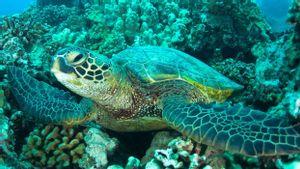 Ahli Ungkap Pencemaran Kimia di <i>Great Barrier Reef</i> Sebabkan Hewan Cacat hingga Mati
