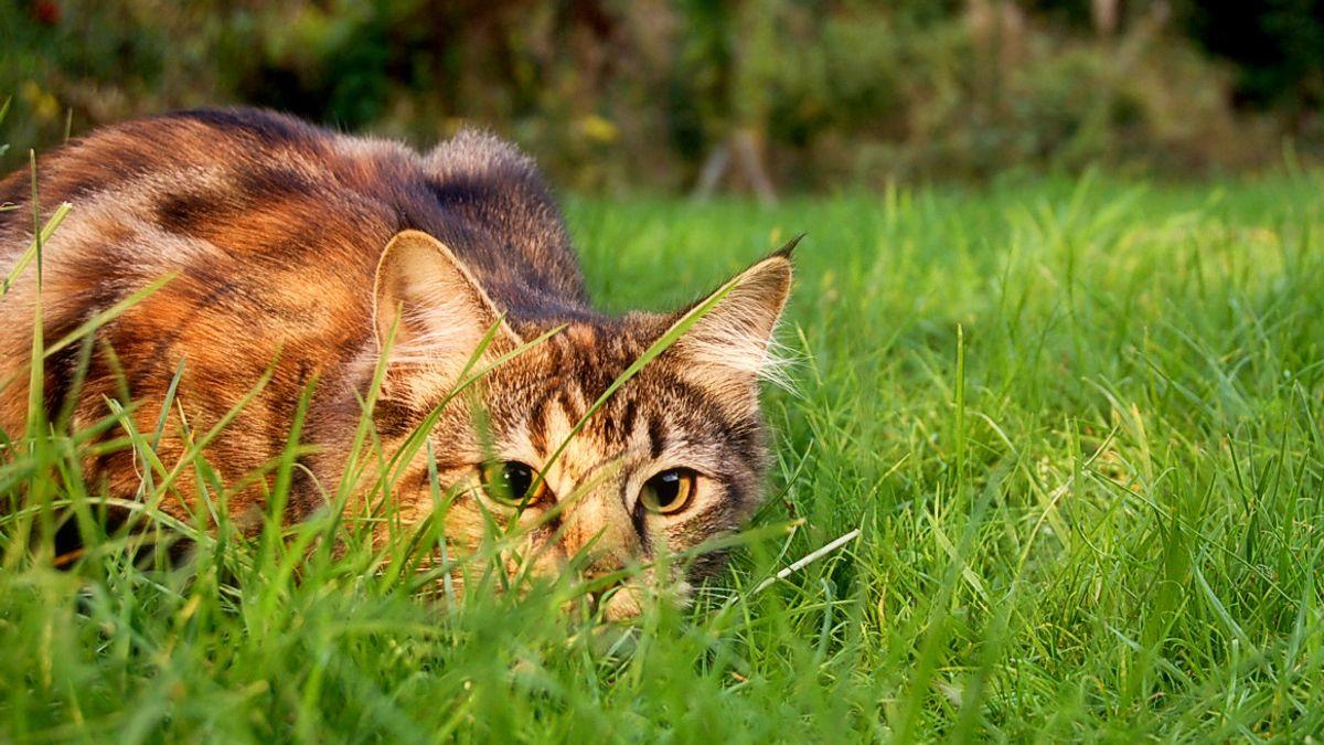 Awas, Kucing Rentan Tertular COVID-19 dari Majikannya Dibanding Anjing