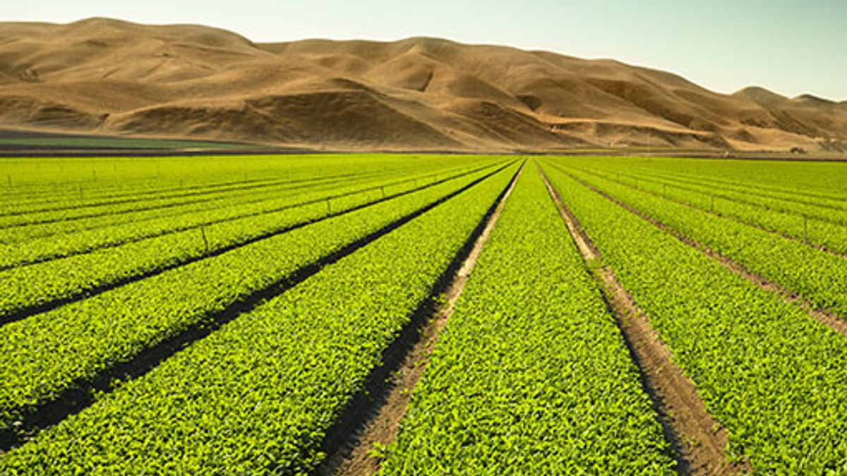 Bill Gates Funds Agriculture With Hydroponic Systems In California