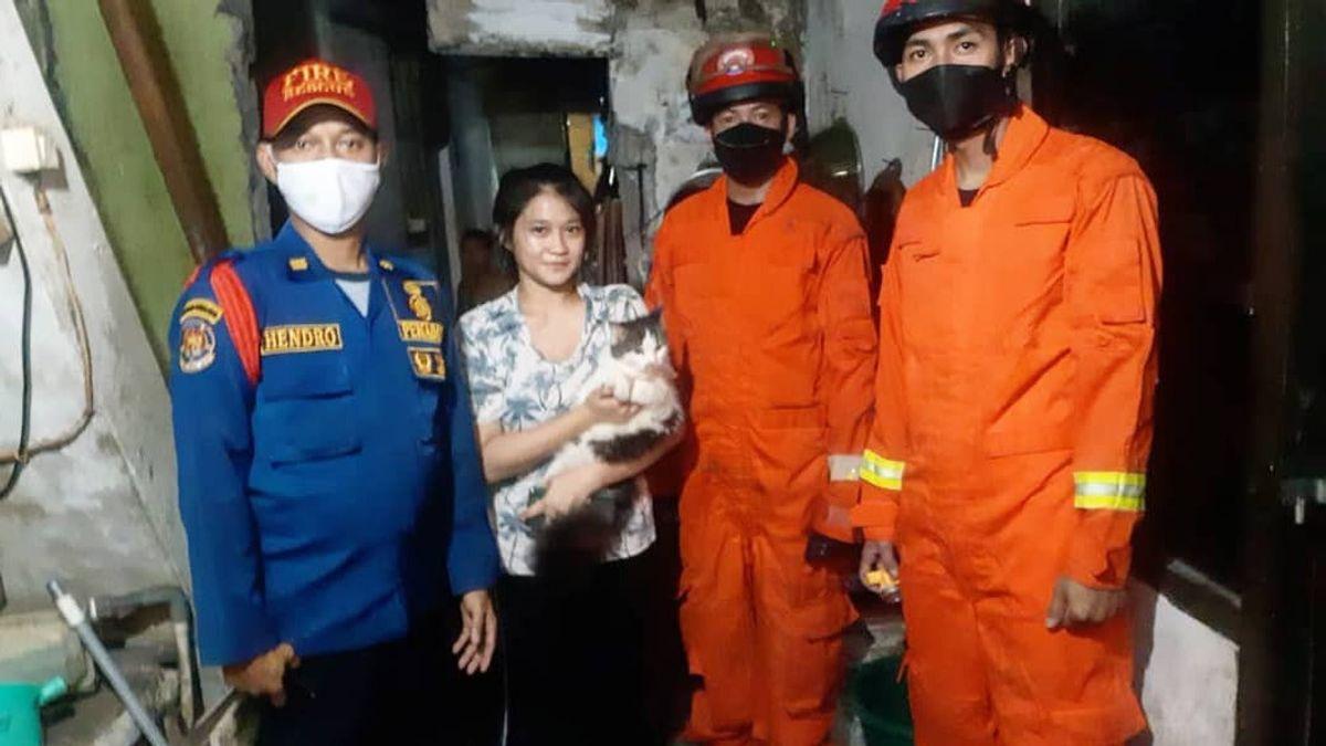 Jempol! Petugas Damkar Selamatkan Kucing di Pademangan yang Terjebak di Tembok