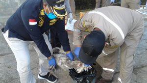 Cegah Flu Burung Masuk Ternate, 21 Ekor Unggas dari Manado Dibakar